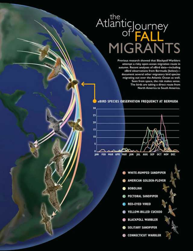 FallMigrants