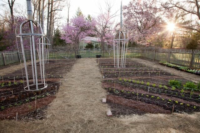 planting-in-the-vegetable-garden-is-underway-lr