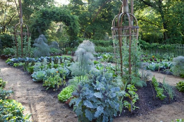 Proactive Fall Vegetable Garden Cleanup With Chanticleer