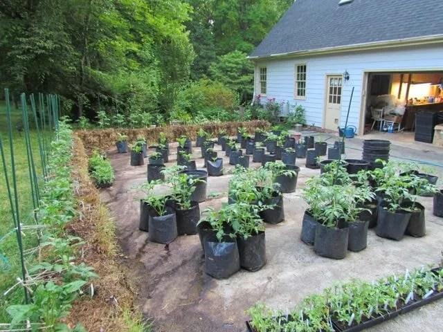 straw bales garden at craig lehoullier's