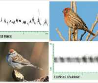birding by ear, with nathan pieplow: how to listen to what birds say