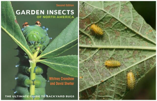 WHEN THE NEW SECOND EDITION Of U201cGarden Insects Of North Americau201d Arrived  Recently From Princeton University Press, I Quickly Went Down A Rabbit Hole.