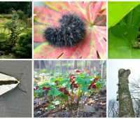 9/16 workshops: find & encourage the wild in your garden, with conrad & claudia vispo