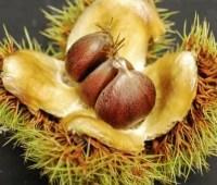 clivia, staking, viburnum leaf beetle, chestnuts & more: q&a with ken druse