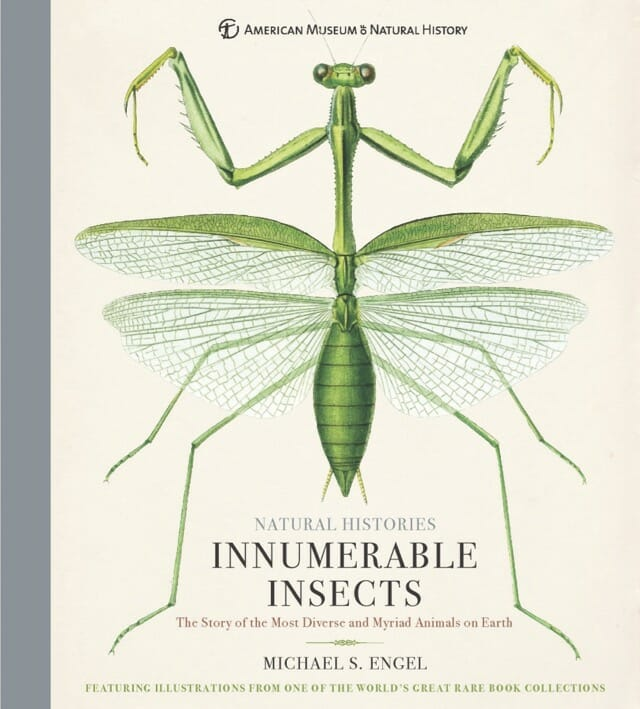 'innumerable insects,' with dr. michael engel