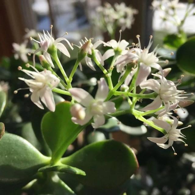 Repotting Houseplants (plus Blooming Favorites