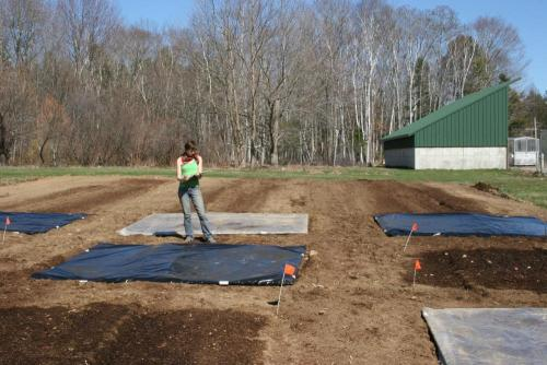 soil solarization and tarping for weed control