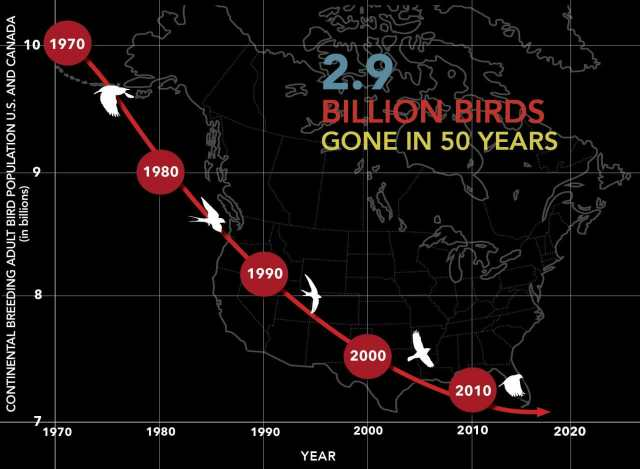 In A Time Of Bird Decline Counting And Feeding Them With