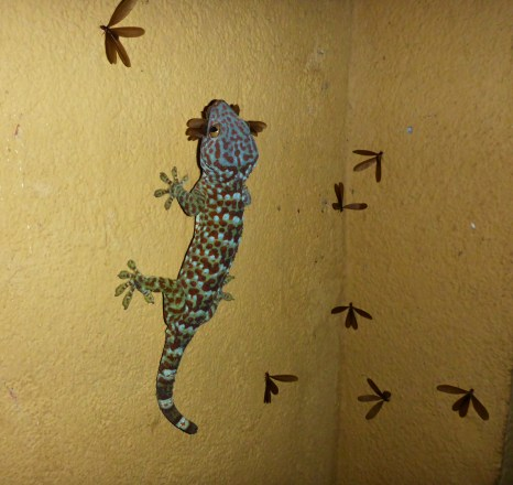 Whitney Bungalow's geckos were some of the more interesting and welcome visitors.