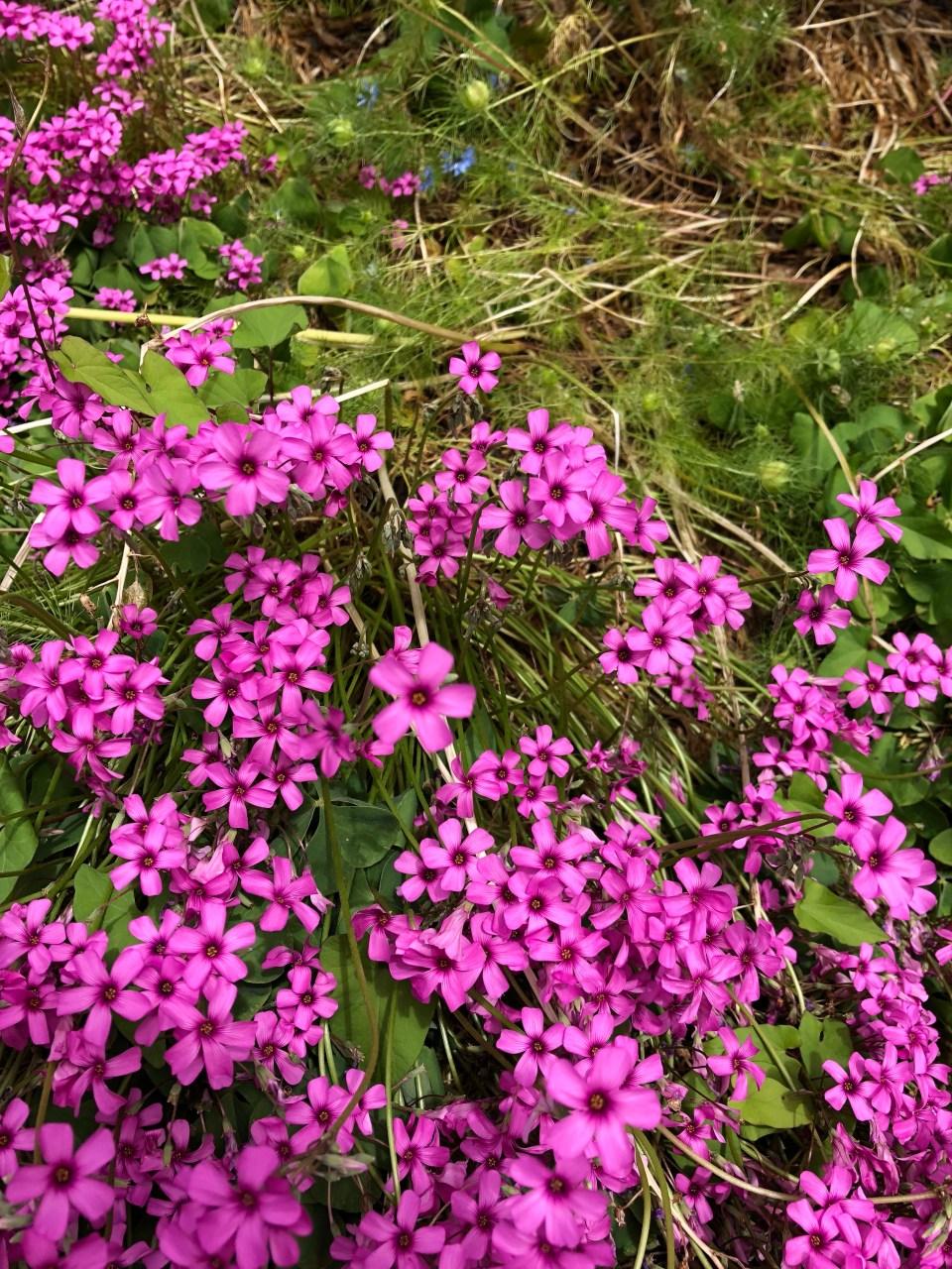 Flowers of Seattle