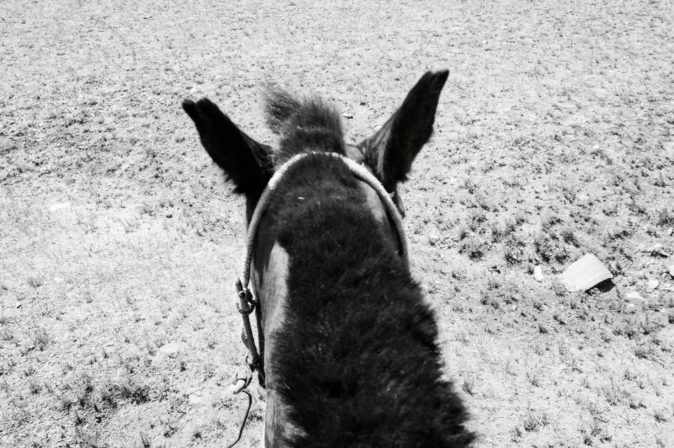 A birds eye view of my horses ears during our horse trek in Mongolia.