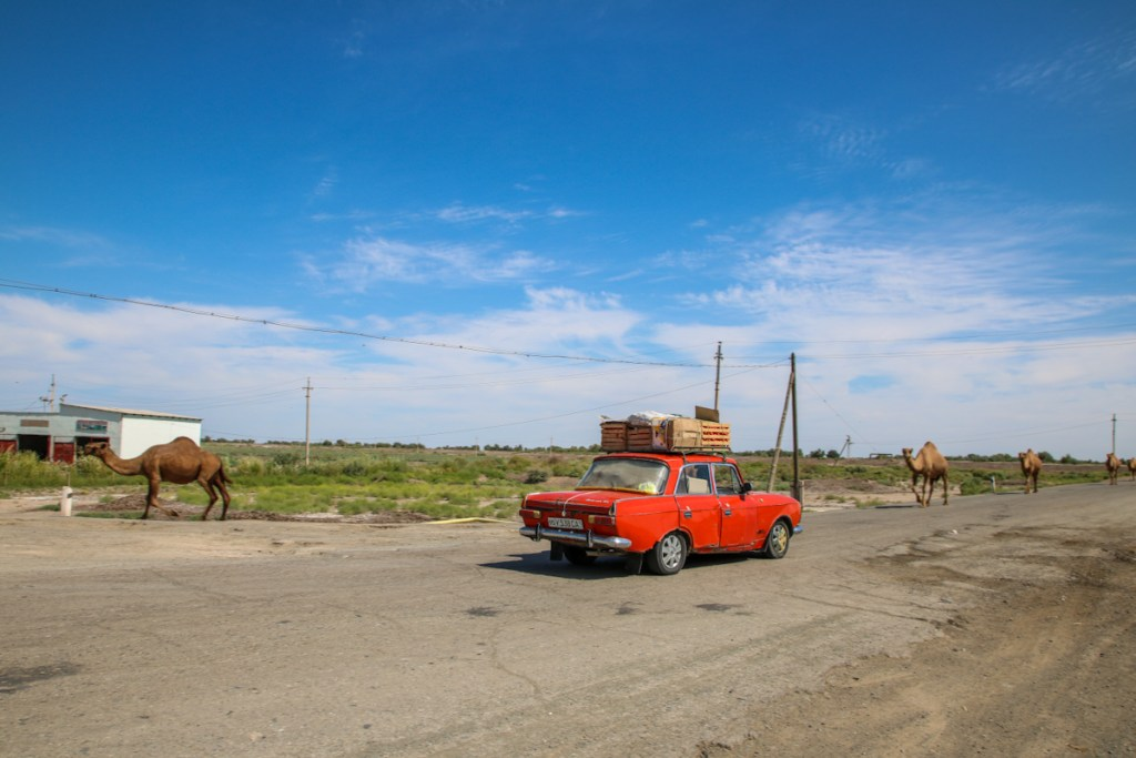 Uzbekistan with kids meant that even a roadside stop was an adventure. We pulled over for camels in the Karakalpakstan desert.