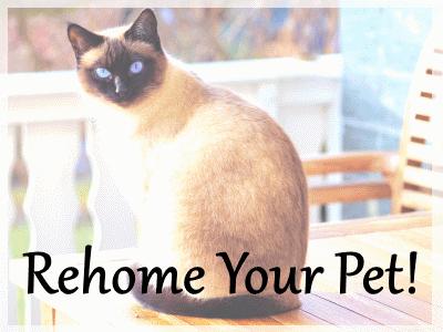Adopt A Pet dot Com