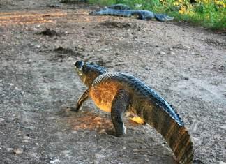 Пантанал национальный парк болота