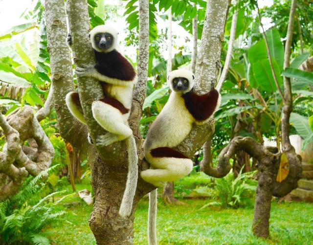 Остров Нуси-Бе Мадагаскар