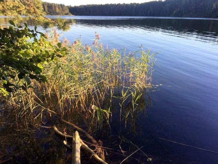 Иммиграция в Литву и ПМЖ