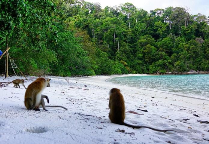 Ко Липе туры на другие острова