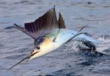 Рыбалка в Коста-Рике