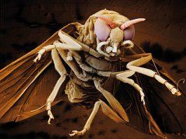 Песчаные мухи (Sandfly) на пляжах Азии