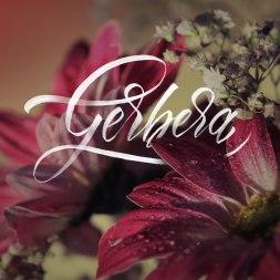Леттеринг-проект «Цветы и буквы»