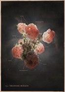 Научные иллюстрации и визуализации Маркоса Кэя (Markos R. Kay) из Лондона