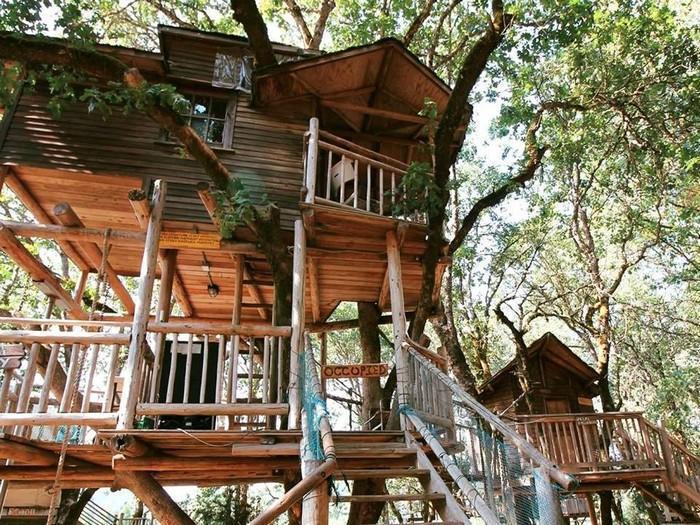 25 casas na rvore espetaculares ao redor do mundo