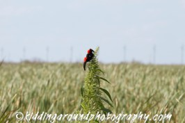 Great Florida Birding Trail