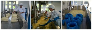 Cheddaring and salting the milled curds before moulding and pressing