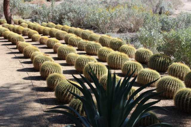the gardens at the Annenberg Estate