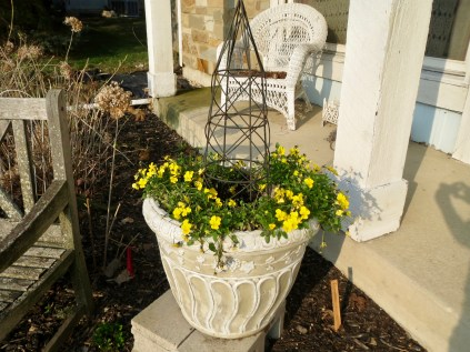 I planted an $8 basket of yellow pansies in the container.