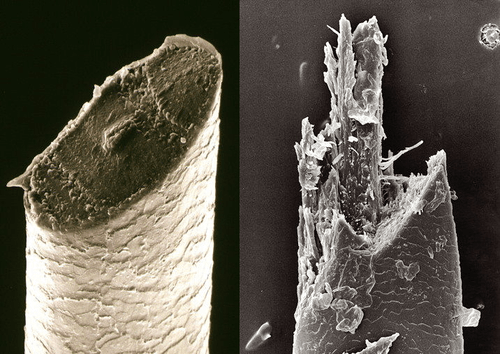 magnified image of Hair cut using a fixed blade and electric shaver