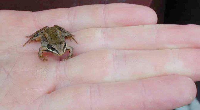 Wood Frog Dies and Comes Back to Life