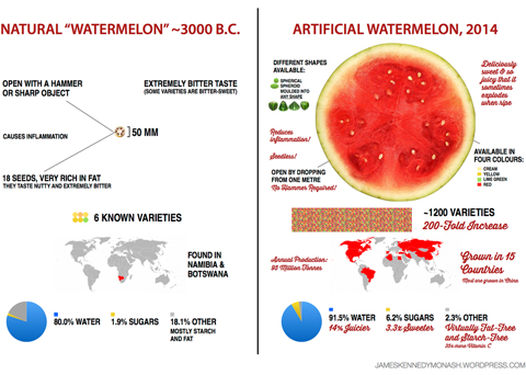 watermelon evolution