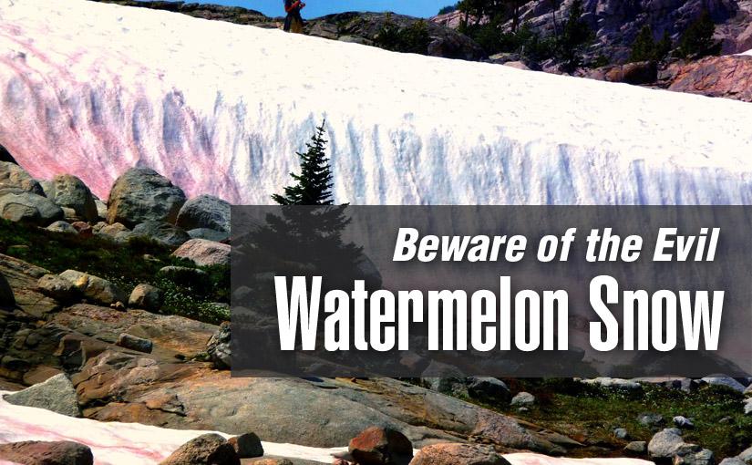 Beware of the Watermelon Snow
