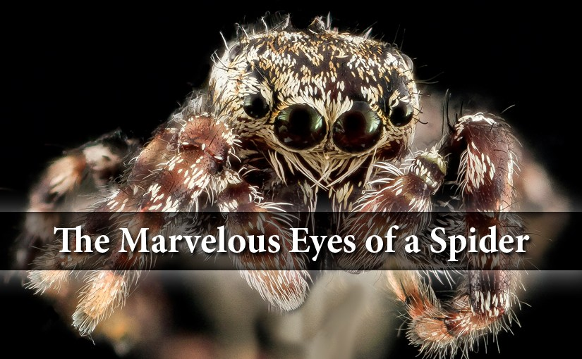 Spider Eyes are Nature's Marvels