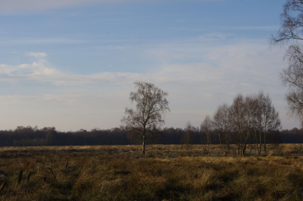 Diepholzer Moor (CC http://awesomatik.wordpress.com)