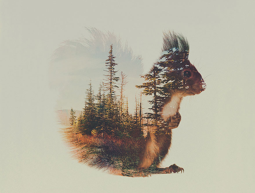 animals_landscapes_doubleexposure_08