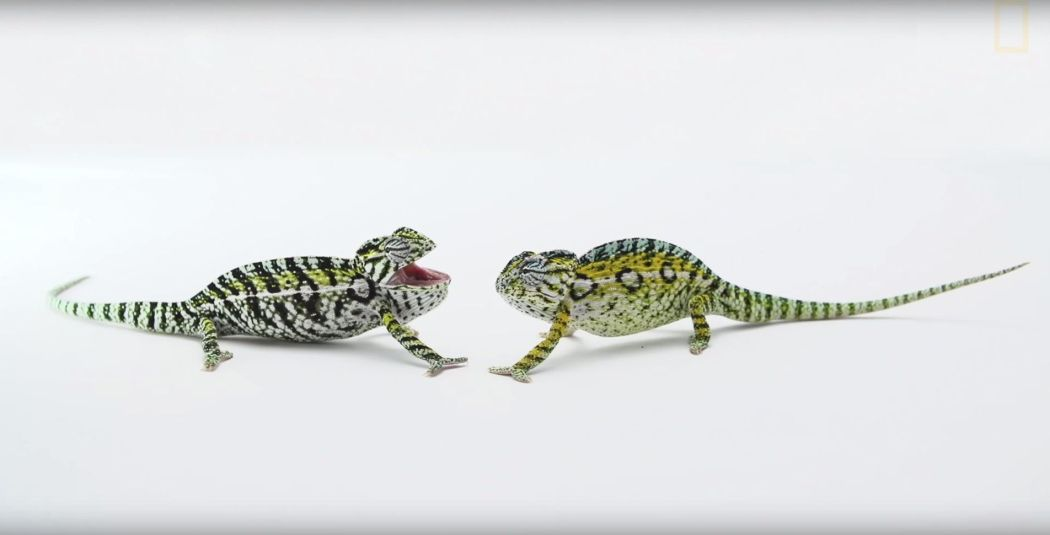 Chameleons Screenshot1