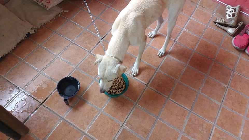 Heinze Sánchez new buddy Enzo eating