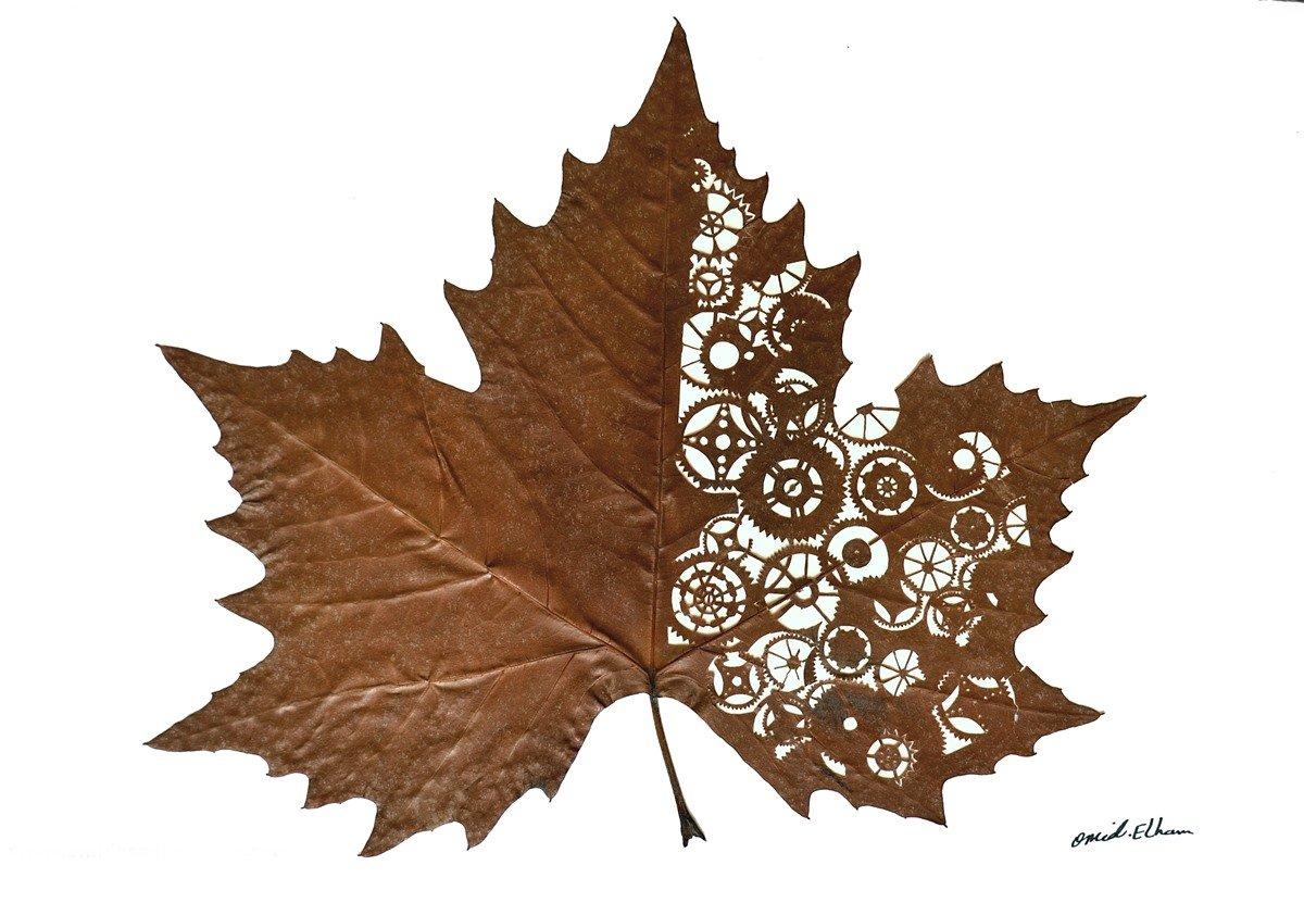 Omid Asadi Leaf Art Image 7