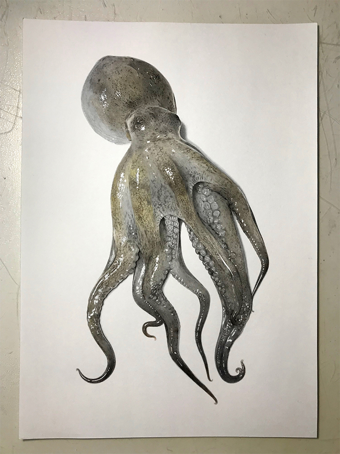 How to Draw an Octopus - Really Easy Drawing Tutorial