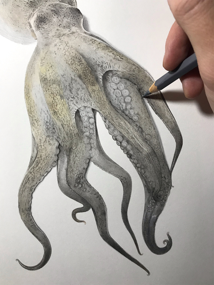 Realistic Octopus Drawing : realistic, octopus, drawing, Japanese, Artist, Illustrates, Step-By-Step, Process, Drawing, Realistic, Octopus