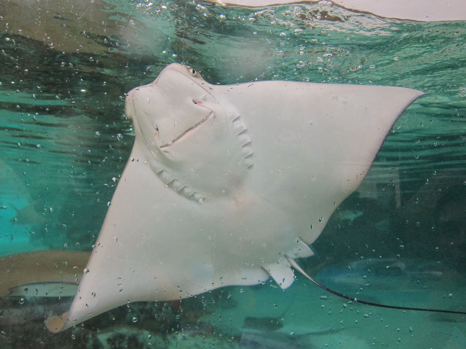 This Stingray Helped Put A Ring On It