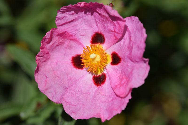 flower_6977