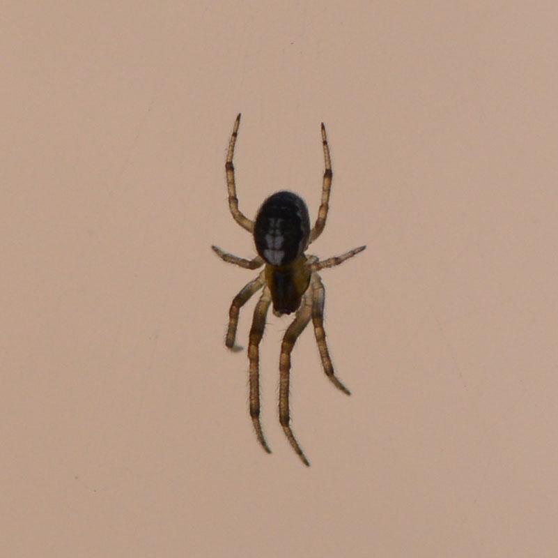 spider_7425