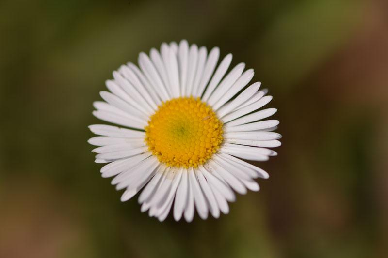 white-flower_7818