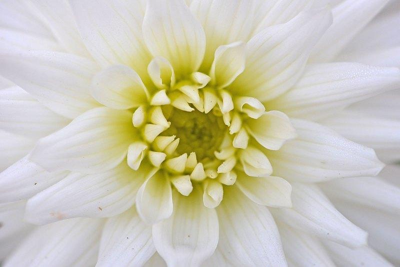 FLOWER_4115