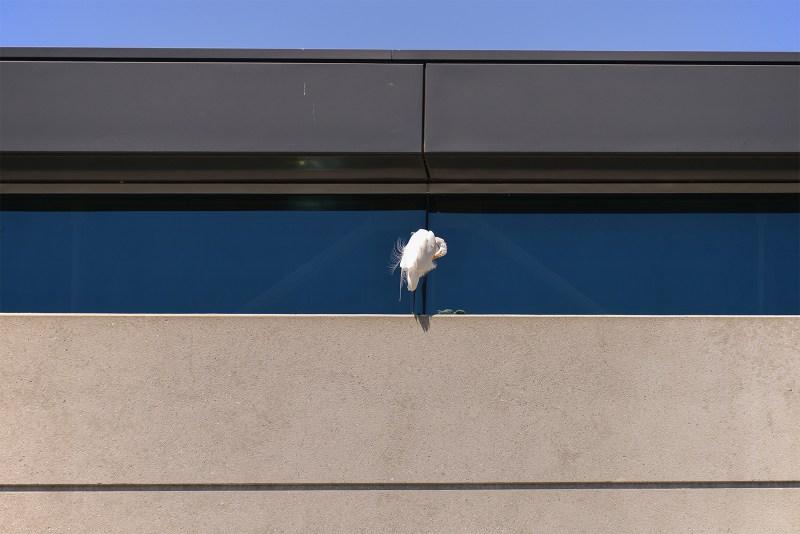 Microsoft Egret