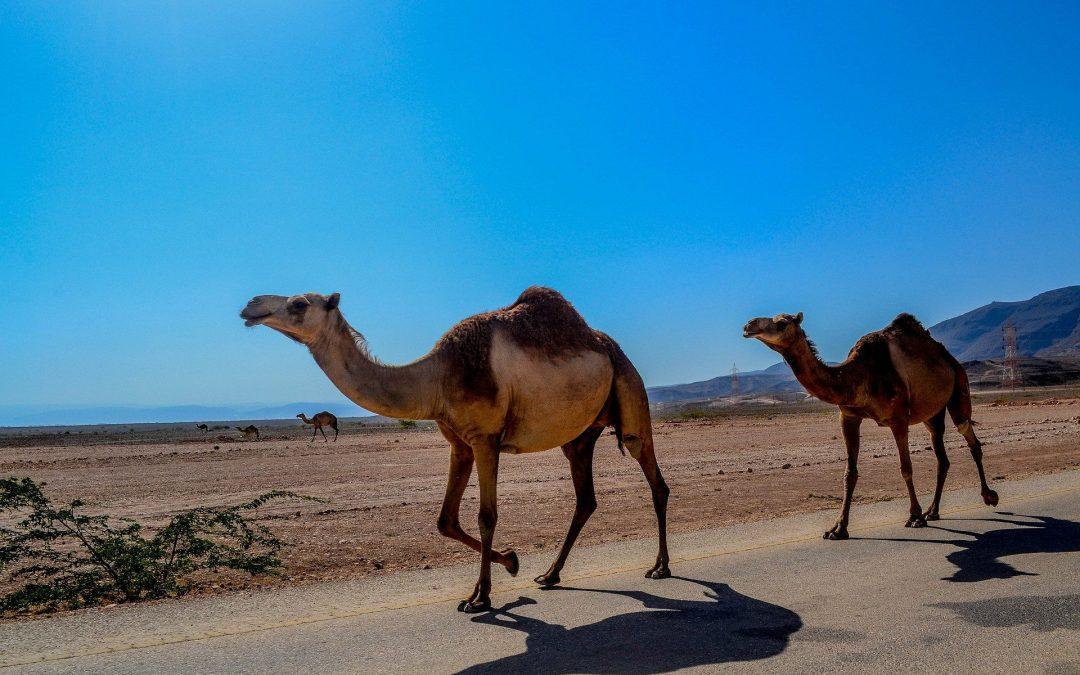 Outstanding Oman