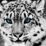 Animals Wallpaper Set 1 Awesome Wallpapers